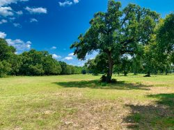A green pasture with a tall oak tree in the middle.
