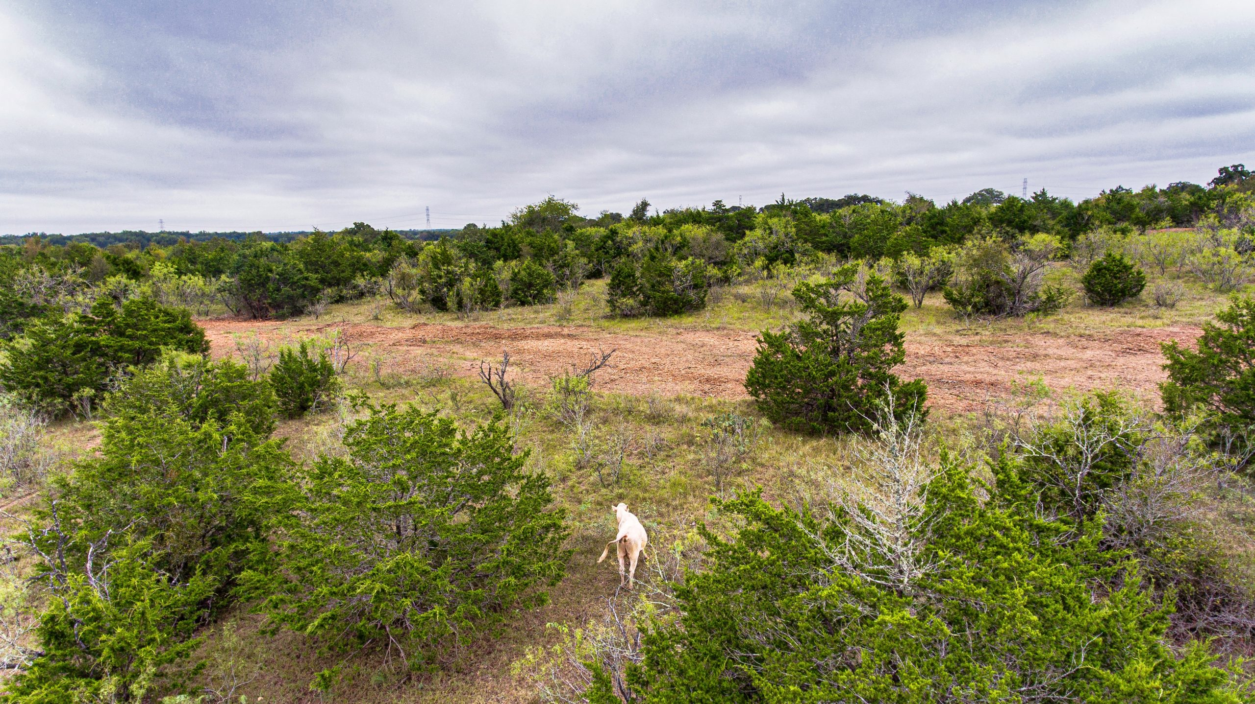 view of land with grazing cattle and scattered trees