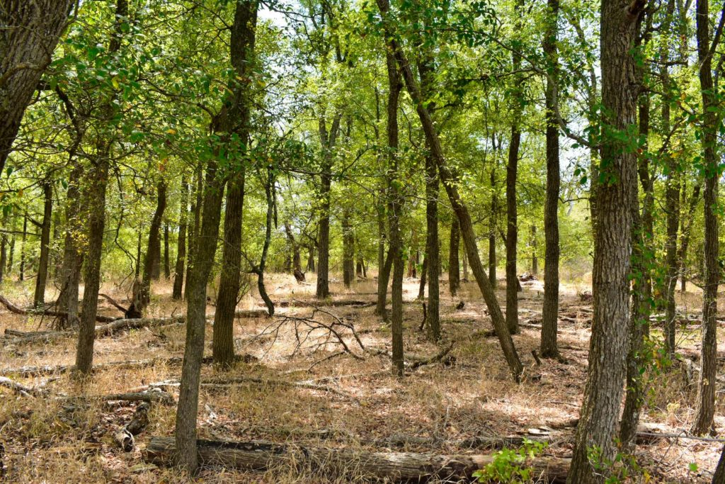 forest of trees on wolf lane property in texas