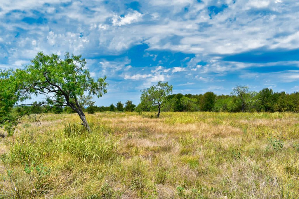 open pasture with views and scattered trees on property for sale