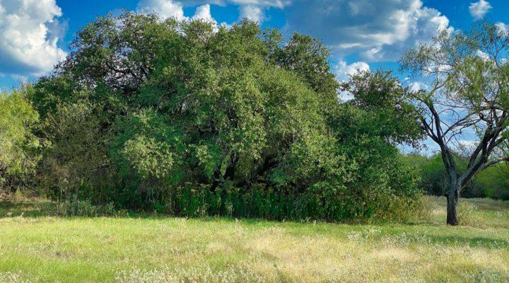 Magnolia Estates Tract G