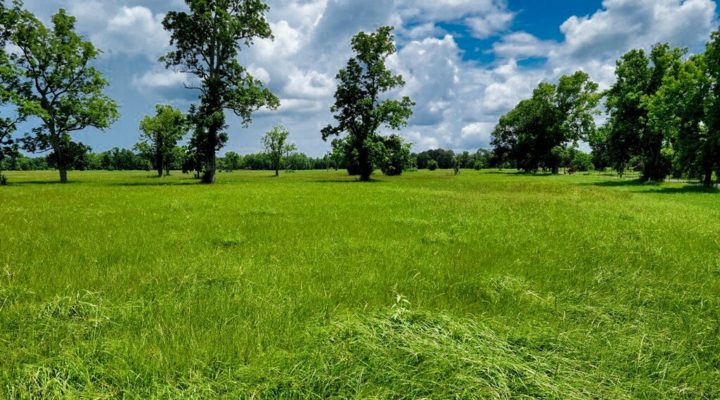 Milam Ranch Tract E